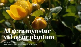 At gera mynstur við og úr plantum